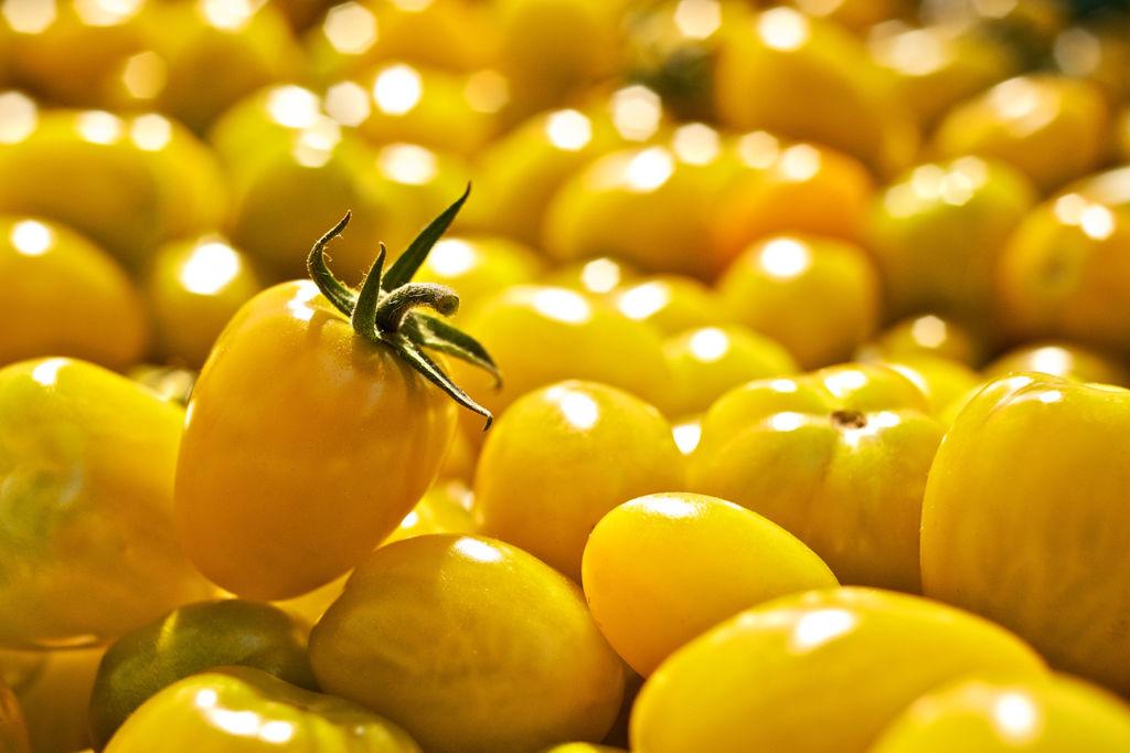 Produkt-Foto gelbe Tomaten