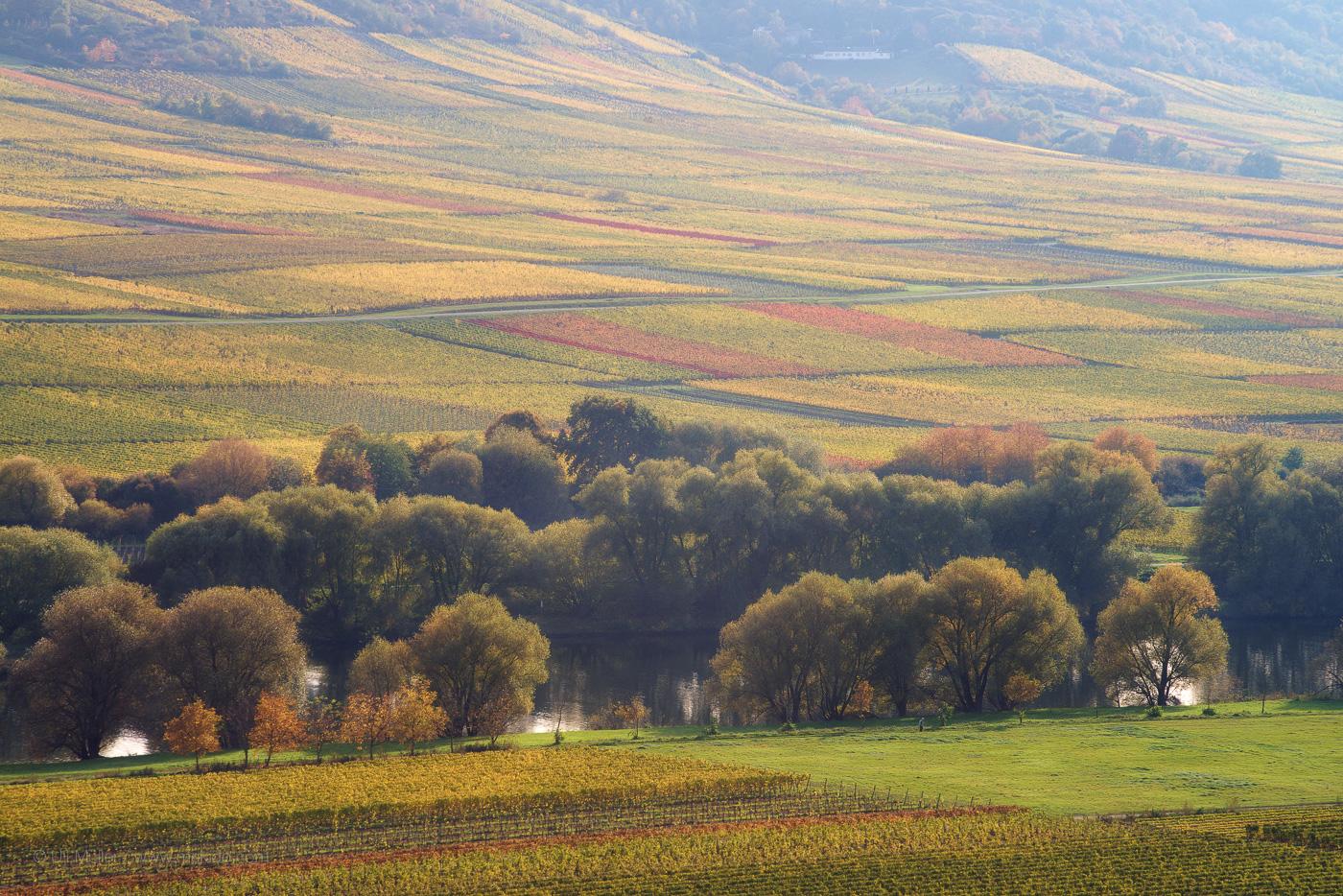 Landschaftsfoto mit Mosel und Weinlage in der Nähe von Wintrich.